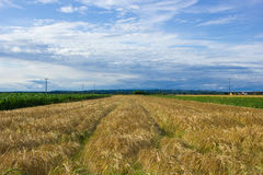 Krajobraz Medjimurje, Chorwacja obrazy stock