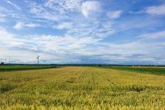 Krajobraz Medjimurje, Chorwacja Obraz Stock