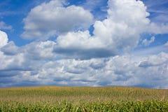 Krajobraz Medjimurje, Chorwacja Zdjęcie Stock