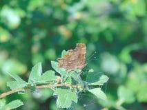 Krajobraz motyl zdjęcia stock