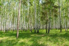Krajobraz na Pogodnym letnim dniu w lesie, Fotografia Royalty Free