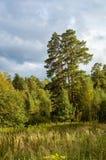 Krajobraz na Pogodnym letnim dniu w lesie, Fotografia Stock