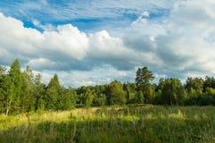 Krajobraz na Pogodnym letnim dniu w lesie, Zdjęcia Royalty Free