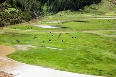 Krajobraz na Sichuan autostradzie w Chiny zdjęcie royalty free