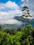 Krajobraz nad herbacianymi plantacjami w Kerala, Munnar, India Obrazy Stock