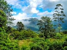 Krajobraz nad herbacianymi plantacjami w Kerala, Munnar, India Fotografia Stock