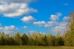 Krajobraz natura, pola, łąki, trawa, drzewa, niebo Zdjęcia Stock