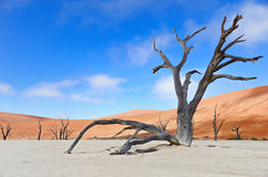 Nieżywy Vlei, Namibia, Południowa Afryka Zdjęcia Stock
