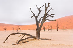 Krajobraz Nieżywy Vlei, Namibia Zdjęcia Royalty Free