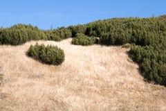 Krajobraz od Bucegi gór Obrazy Royalty Free