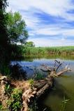 Krajobraz od jeziora Obrazy Royalty Free