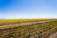 Krajobraz od Południowa Afryka, Dragon& x27; s góry Zdjęcie Royalty Free