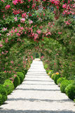 krajobraz ogrodniczego rose Obraz Stock