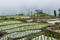 Krajobraz, Pa Pong Piang ryżowi Tajlandia tarasy obraz royalty free
