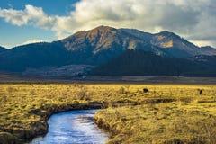 Krajobraz Phobjikha dolina, Bhutan obraz royalty free