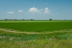 Krajobraz Po ujścia rzeczni otaczający obszary, Scardovari Inle Zdjęcie Stock