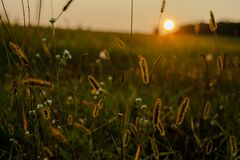 Krajobraz pole przy zmierzchem obraz stock