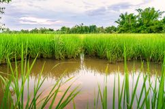 Krajobraz pole uprawne i zieleni pole z reflec rzeki i nieba Fotografia Royalty Free
