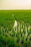 Krajobraz pole w spokojnym momencie Obrazy Royalty Free