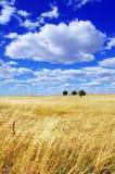 Krajobraz portuguese równina Zdjęcia Royalty Free