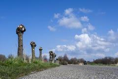 Krajobraz przy Westerlanderkoog zdjęcie royalty free