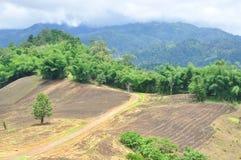 Krajobraz rolniczy pole z górą, rolnictwo scena, Lasowy zniszczenie Obrazy Stock