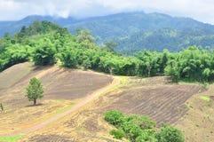 Krajobraz rolniczy pole z górą, rolnictwo scena, Lasowy zniszczenie Zdjęcie Stock