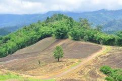 Krajobraz rolniczy pole z górą, rolnictwo scena, Lasowy zniszczenie Zdjęcia Stock