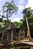 Krajobraz ruiny świątynia w Siem Przeprowadza żniwa zdjęcie royalty free