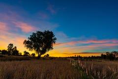 Krajobraz ryżu pole po żniwa przy jutrzenkowym czasem obrazy stock