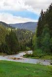 Krajobraz rzeka wśród Carpathians gór z jedliną Obraz Stock