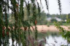 Krajobraz Saxony Fotografia Stock