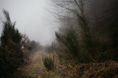 Krajobraz tajemnicze drogi mgła Obraz Royalty Free