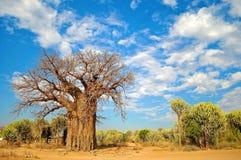 Krajobraz Tanzania Zdjęcie Stock