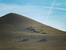 Krajobraz Turkmenistan zdjęcia stock