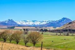 Krajobraz Underberg, mała wsi wioska z śnieżnymi odzianymi Drakensberg górami i zieleń krajobrazami zdjęcia royalty free