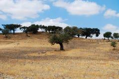 Krajobraz w Alentejo Obrazy Royalty Free