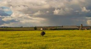 Krajobraz w Alentejo Zdjęcie Royalty Free
