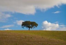 Krajobraz w Alentejo Fotografia Stock
