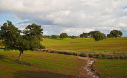 Krajobraz w Alentejo Fotografia Royalty Free
