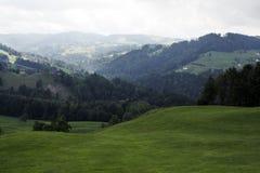 Krajobraz w Alps w Szwajcaria drzewo pola Obrazy Stock