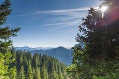 Krajobraz w Alps z drzewami zdjęcia stock