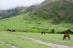 Krajobraz w Andes Salkantay Trekking, Peru Fotografia Royalty Free