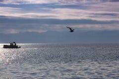 Krajobraz w błękitnym na pięknym Ohrid jeziorze z sylwetkami а łódź i latania seagull macedonia obraz royalty free