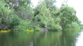 Krajobraz w Danube delcie zbiory wideo