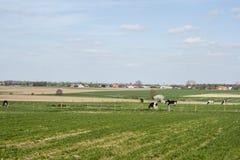 Krajobraz w Flanders odpowiada Belgium niebo i chmury uprawiają ziemię obraz royalty free