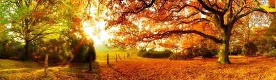 Krajobraz w jesieni obraz royalty free
