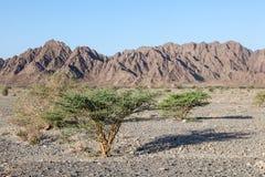 Krajobraz w Oman Fotografia Royalty Free