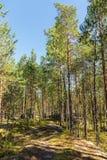 Krajobraz w północnym lesie Fotografia Royalty Free