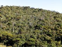 Krajobraz w parka narodowego Horton równinach, Sri Lanka Obraz Stock